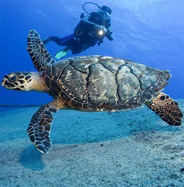 Reasons to buy a villa in Tenerife. Diving and fishing