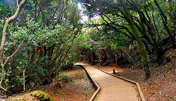 Reasons to buy a villa in Tenerife. The forests of Tenerife